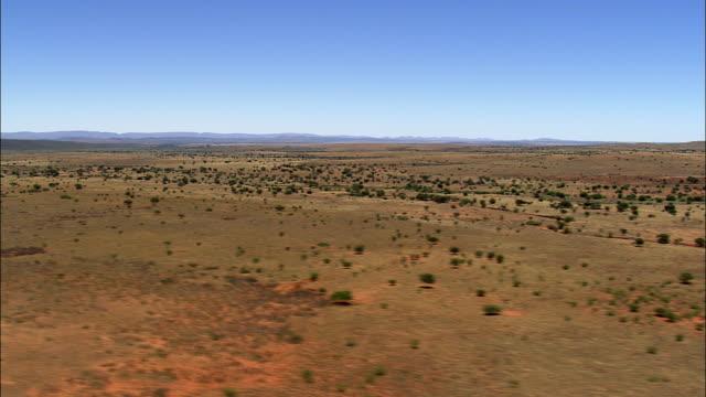 scrubland in südafrika - afrikanische steppe dürre stock-videos und b-roll-filmmaterial