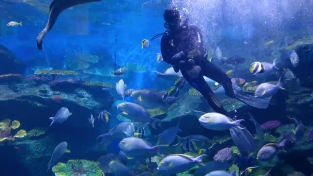 scuba diver feeding fish - подводное плавание с аквалангом стоковые видео и кадры b-roll