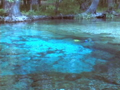 scuba diver весной (ntsc w/audio - источник стоковые видео и кадры b-roll