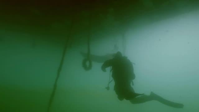vídeos y material grabado en eventos de stock de scuba diver cumple gran siluro - pegajoso