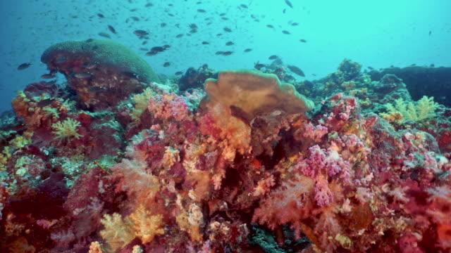 Tauchersicht des pulsierenden Korallenriffs – Video