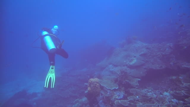 Scuba diver swimming amongst a reef Underwater scenes from Indonesia aqualung diving equipment stock videos & royalty-free footage