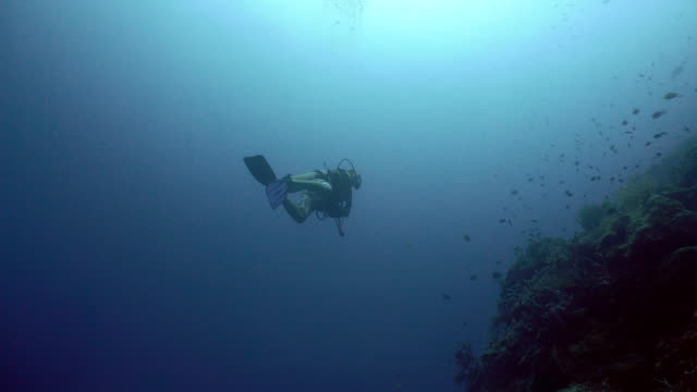 Scuba Diver underwate Scuba diver explores underwater coral reef and watching the fish.Scuba diver underwater in a tropical sea.Tropical fish on a coral reef. Diving and snorkeling in the tropical sea. 4K video. aqualung diving equipment stock videos & royalty-free footage