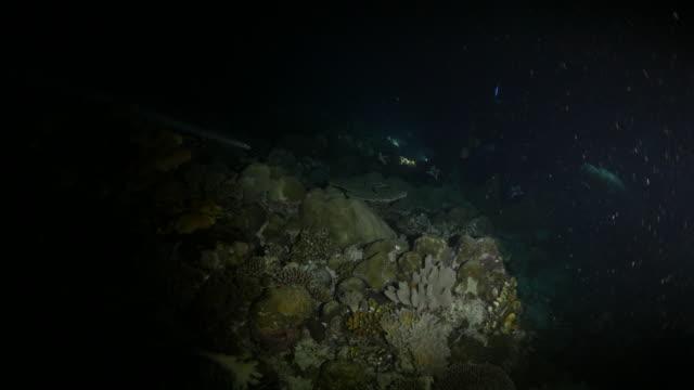 vídeos y material grabado en eventos de stock de buceo en la noche oscura submarinos - zona pelágica