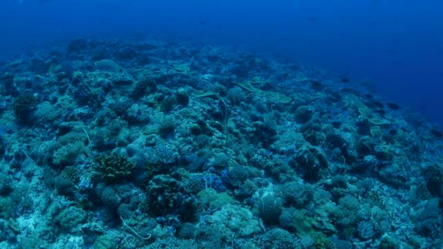 vídeos y material grabado en eventos de stock de buceo en el arrecife de coral submarino, palau - zona pelágica