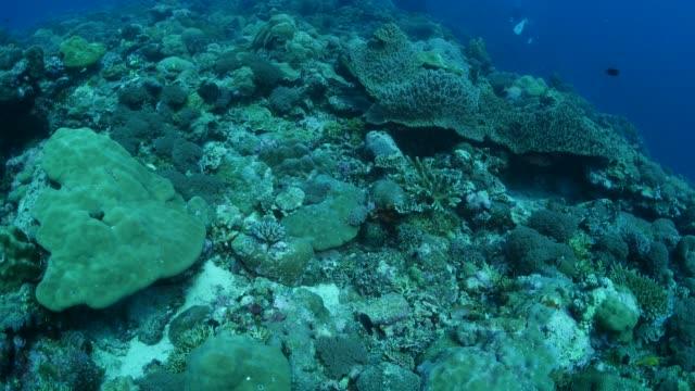 vídeos y material grabado en eventos de stock de buceo en arrecife de coral de palau - zona pelágica