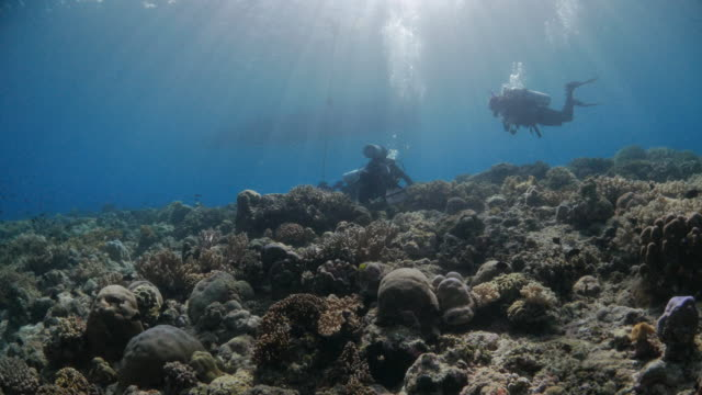 Scuba diving in coral reef of tropical sea video