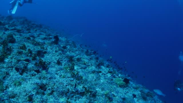 vídeos y material grabado en eventos de stock de buceo en arrecife de coral - zona pelágica