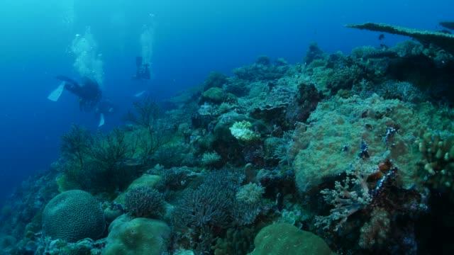 vídeos y material grabado en eventos de stock de buceo en arrecife de coral - micronesia