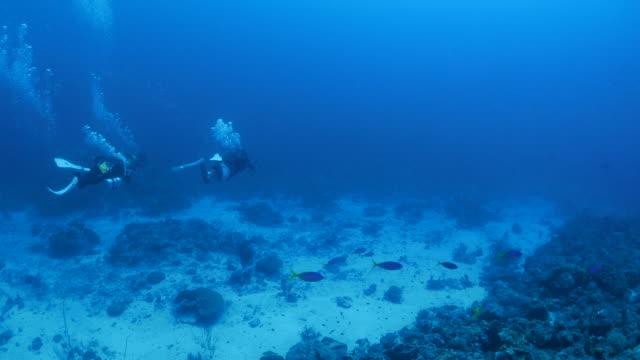 vídeos y material grabado en eventos de stock de buceo en arrecife de coral de aguas profundas - micronesia