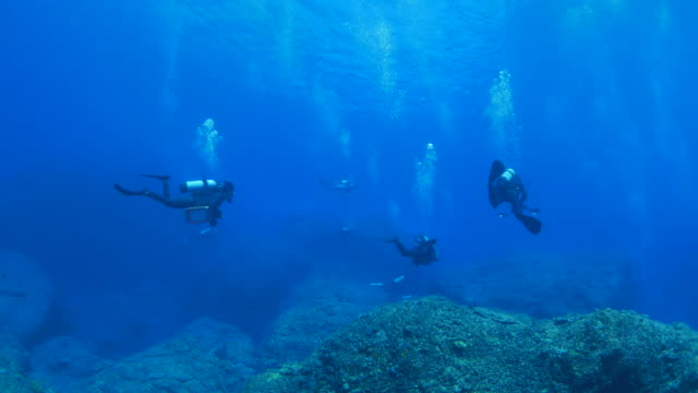 scuba diving in japan undersea - подводное плавание с аквалангом стоковые видео и кадры b-roll