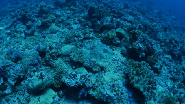 vídeos y material grabado en eventos de stock de buceo en arrecife en el mar profundo - zona pelágica
