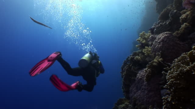 scuba diving near school of fish in coral reef relax underwater red sea. - tuffarsi video stock e b–roll