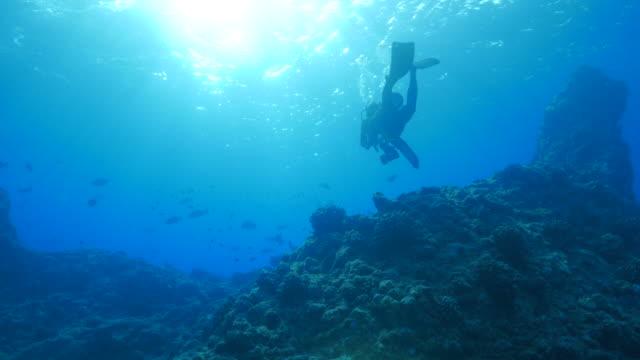 scuba diving through the coral reef - дайвинг стоковые видео и кадры b-roll