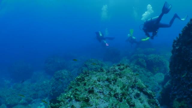 scuba diving undersea at galapagos - дайвинг стоковые видео и кадры b-roll