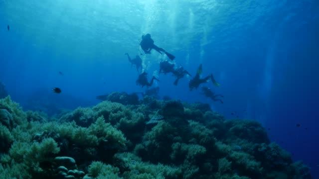 vídeos y material grabado en eventos de stock de arrecife de coral submarino, buceo scuba - palaos