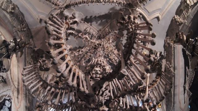 stockvideo's en b-roll-footage met 4k-en botten beelden - dierlijk bot