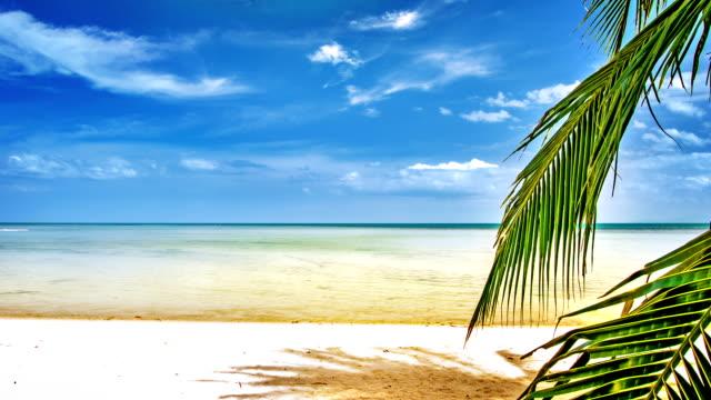 Sea and palm tree