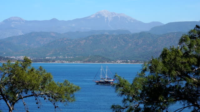 sea and pine tree. blue voyage. - fethiye video stock e b–roll