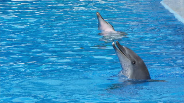 sea animal , dolphin sea animal , dolphin dolphin stock videos & royalty-free footage