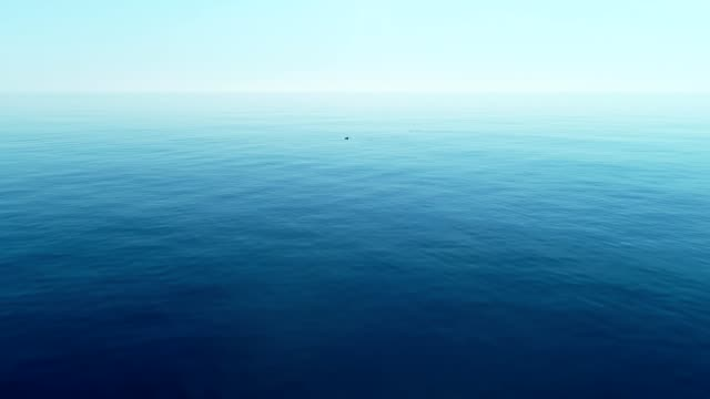Sea background with dolphins swimming in open sea, flying over the turquoise calm water. Travel concept. video