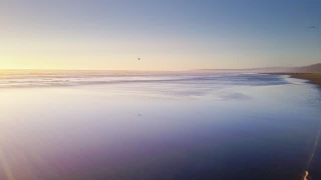 Sea Birds on Remote Beach on Washington Coast - Aerial Shot