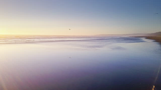 Sea Birds on Remote Beach on Washington Coast - Aerial Shot Drone shot of a remote beach in the Pacific Northwest at sunset. Moclips, Grays Harbour County, Washington, United States. seagull stock videos & royalty-free footage