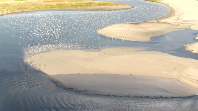 海の鳥は、海の上の午後遅くに飛行を取ります - 水鳥点の映像素材/bロール