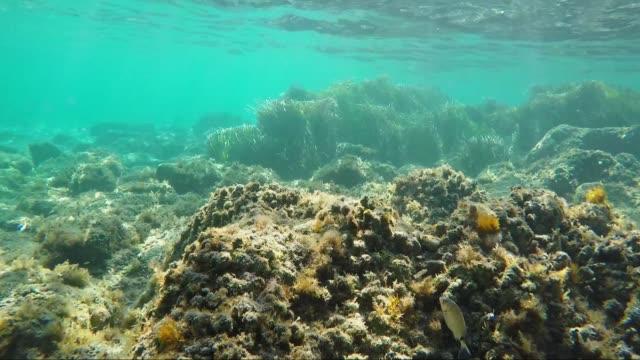 stockvideo's en b-roll-footage met zeebodem met enkele vissen zwemmen arround - rocks sea