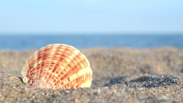 vidéos et rushes de coquillages de mer sur la plage.prise de vue sur la plage. - bivalve