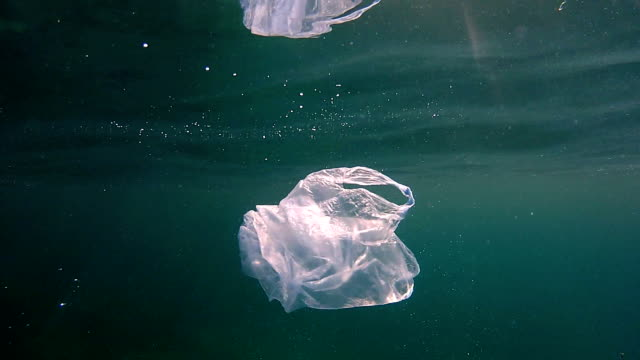 Sea ecology video