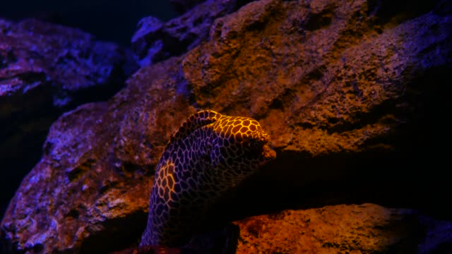Sea Eels In Fish Tank Aquarium Decoration Moray Eel In Fish Tank Stock Video Download Video Clip Now Istock