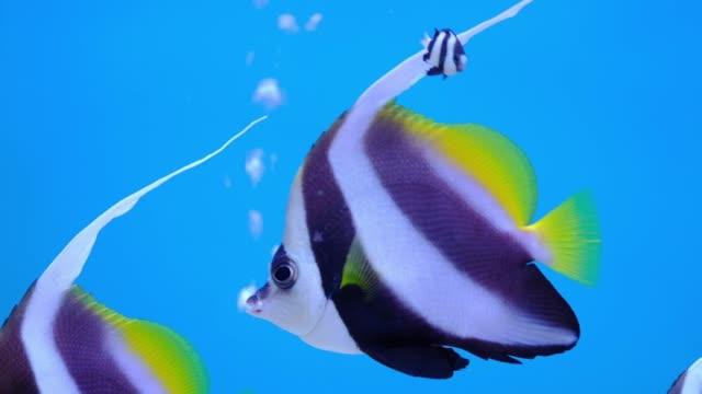 sea fish life in aquarium tank - морская рыба стоковые видео и кадры b-roll