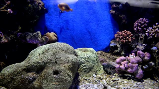 ryby morskie - gad filmów i materiałów b-roll