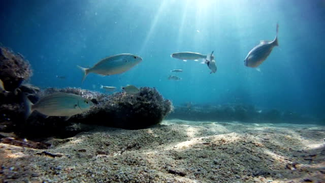 Sea fishes, loopable, copy space Sea fishes, loopable, copy space, underwater view ocean floor stock videos & royalty-free footage