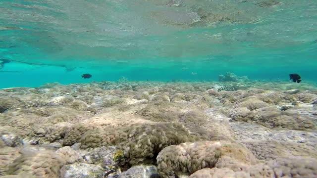 Sea Grass, Static Scene, Red Sea video