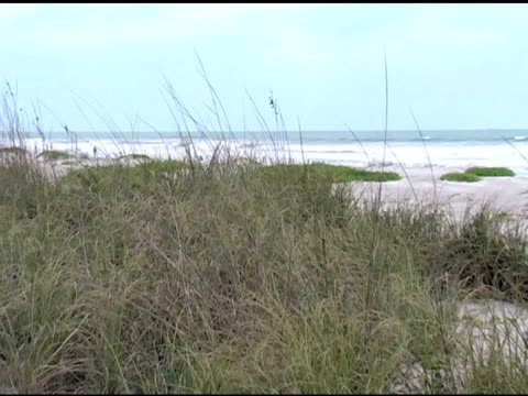 Sea Grasses, Sand Dunes, Ocean Waves and Blue Sky video