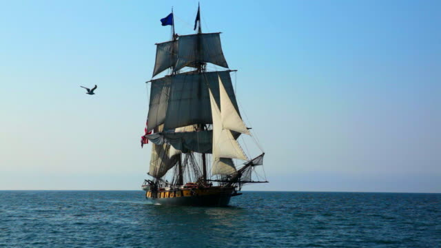 Sea Gull Flies in Front of Tall Ship