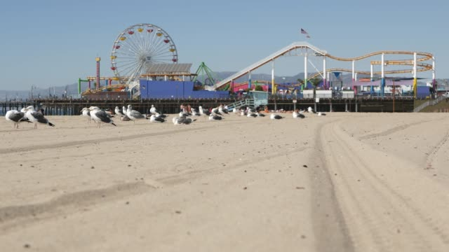 Sea gulls on sunny sandy california beach, classic ferris wheel in amusement park on pier in Santa Monica pacific ocean resort. Summertime iconic view, symbol of Los Angeles, CA USA. Travel concept