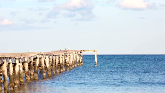 sea gulls on the jetty in the seascape video