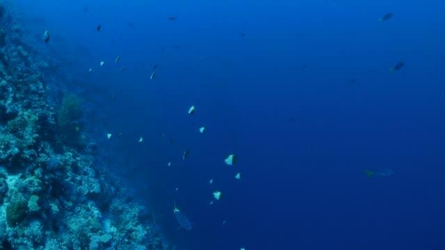 vídeos y material grabado en eventos de stock de vida marina, arrecifes de coral, palau - sea life park
