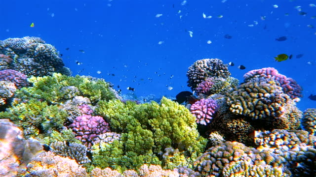 Sea life on beautiful coral reef with lot of tropical Fish in Red Sea - Marsa Alam - Egypt