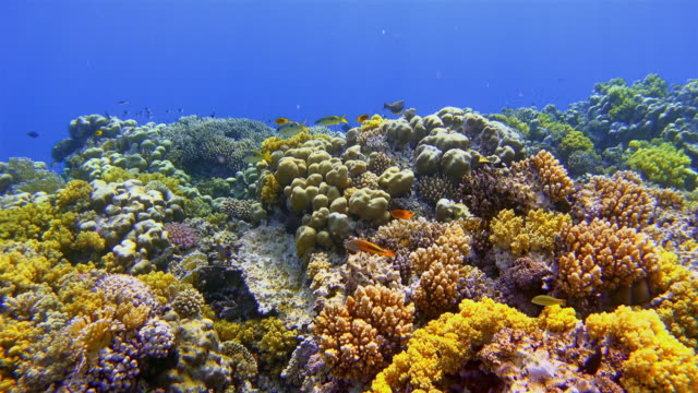 Sea life on beautiful coral reef with lot of tropical Fish on Red Sea nearby Marsa Alam video
