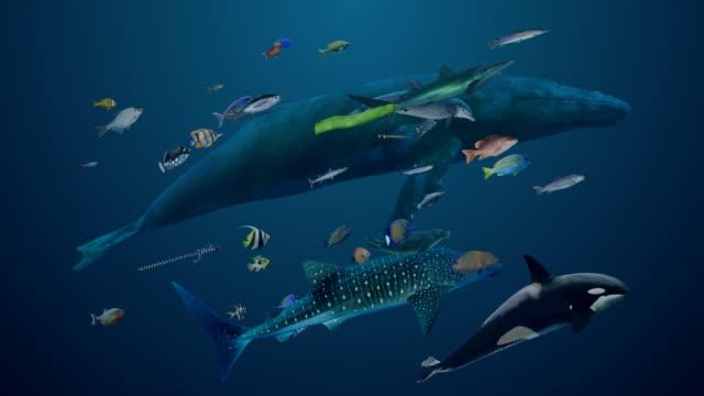 vidéos et rushes de variété de la vie de mer (avec mat) - baleine