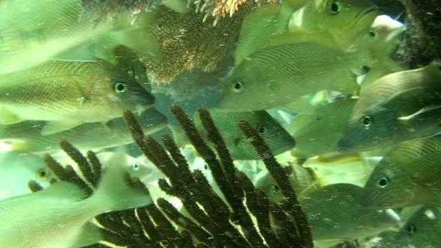 Sea Life video