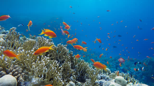 sea lilies, crinoidea, Life in the ocean. Tropical fish and coral reefs. Beautiful corals. video