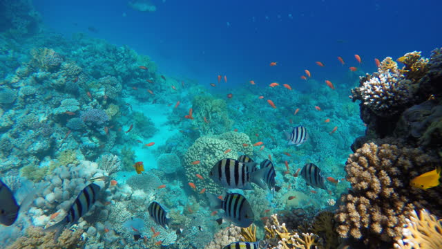 sea lilies, crinoidea, The ocean and the corals. Colorful tropical fish.  Beautiful corals. video