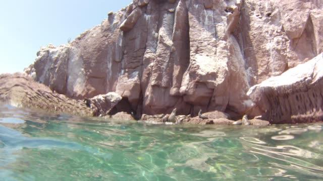 sea lion swimming video