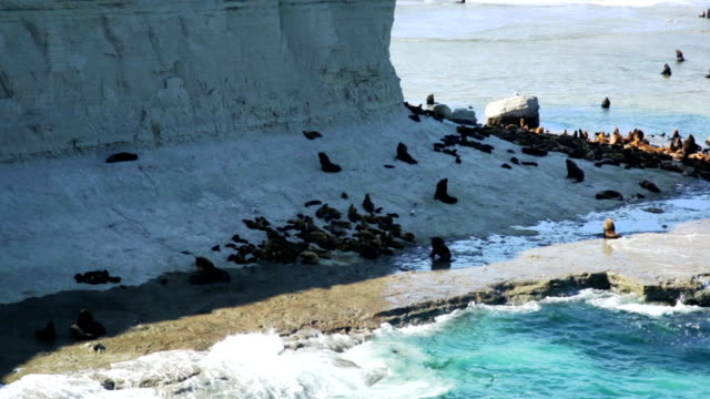 sea lions rookeries at ocean coast - penisola video stock e b–roll