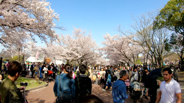Sea of blooming cherry blossom sakura in Expo '70 Commemorative Park. People, families, kids and tourist enjoying themselves in the park. Beautiful blooming cherry blossom. Osaka, Japan. seoul stock videos & royalty-free footage